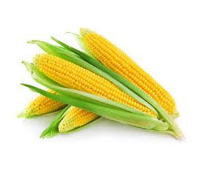 kukuruznaya-dieta